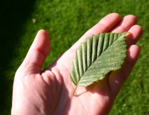 Ein gruenes Blatt